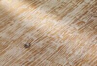 Лиственница INTENSIVE состаренная distressed white (INTENSIVE Larch AGED distressed white)